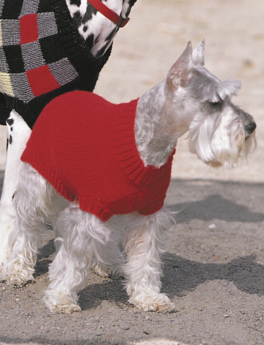 Basic Dog Coat
